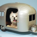Dog Friendly Caravan Parks in Australia