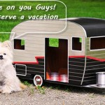 Simple Pet Care Tips for a Pet Friendly Caravan Holiday